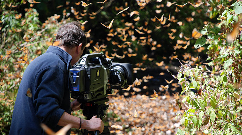 LIFE: The ultimate natural history documentary starts Sunday!